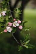 pink and white flowers on brown tree branch